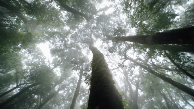 Tropical rain forest trees, Birth of cloud