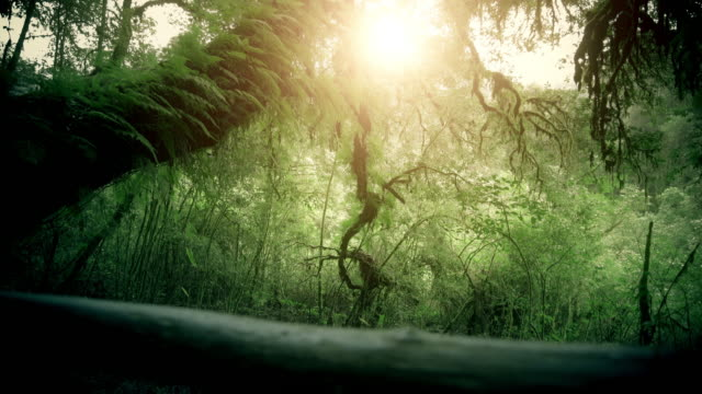 tropical rain forest trees, birth of cloud - dolly shot stock videos & royalty-free footage