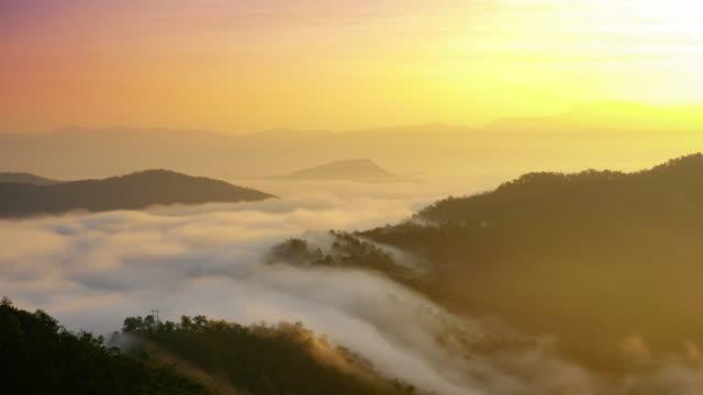 tropischer regen wald bäume, geburt der wolke - nebel stock-videos und b-roll-filmmaterial