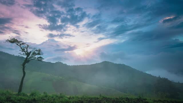 vídeos de stock, filmes e b-roll de floresta tropical, árvores de nascimento de nuvem - parélio