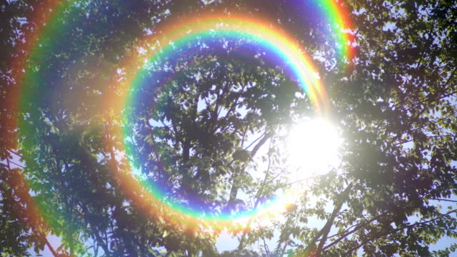 tropical rain forest trees with rainbow flare - spectrum stock videos & royalty-free footage
