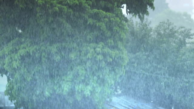 tropical rain forest - monsoon stock videos and b-roll footage