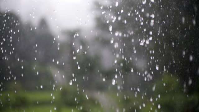 vídeos de stock, filmes e b-roll de tropical rain in summer. - pingo de chuva