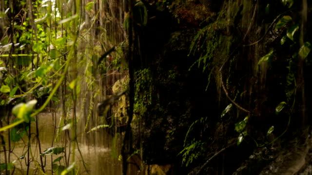 Tropischer Regen im Wald