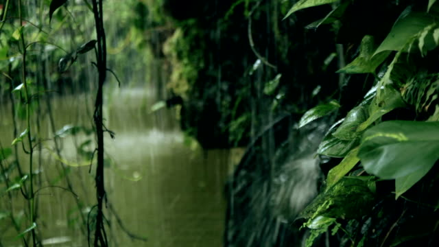 stockvideo's en b-roll-footage met tropical rain in the forest - tropisch regenwoud