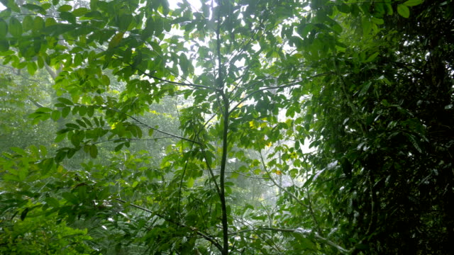 tropical rain in the jungle - tropical rainforest stock videos & royalty-free footage