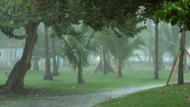 tropical rain storm - hurricane storm stock videos and b-roll footage