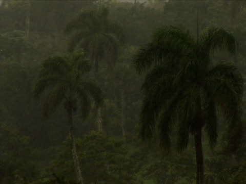 tropical rain - hispaniola stock videos & royalty-free footage