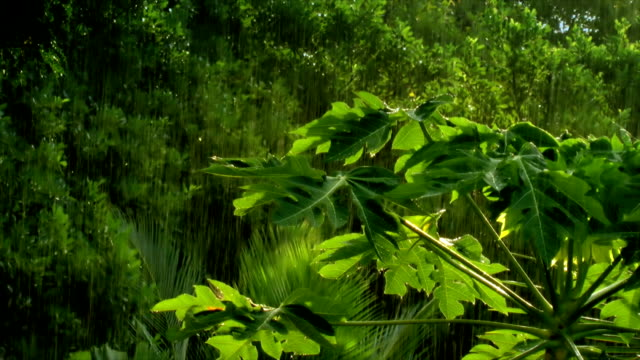 tropical rain - tropical tree stock videos & royalty-free footage