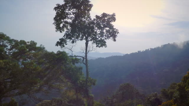 tropical rainforest canopy - malaysia stock videos & royalty-free footage