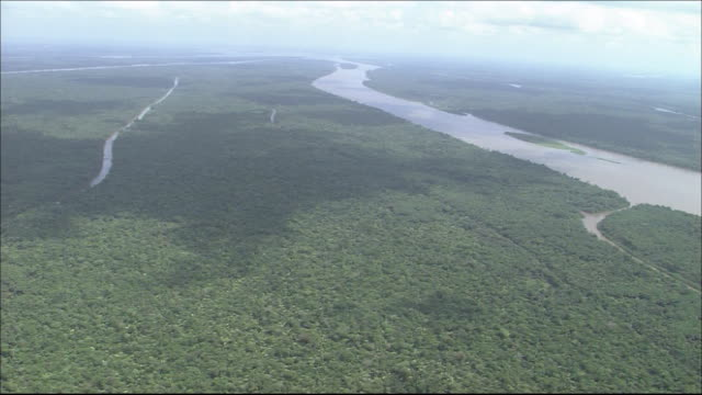 Tropical rainforest in River Amazon catchment area  River flowing through forest  Wide Shot  Aerial Shot