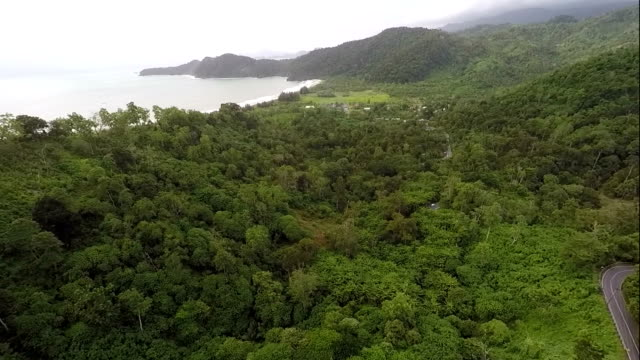 Tropical Rainforest, Road and Sea, Aerial