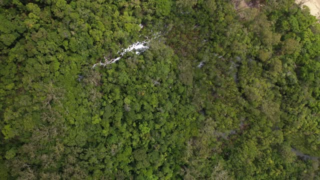 tropical rainforest tree canopy, river, mangrove swamp, aerial view - bush stock videos & royalty-free footage