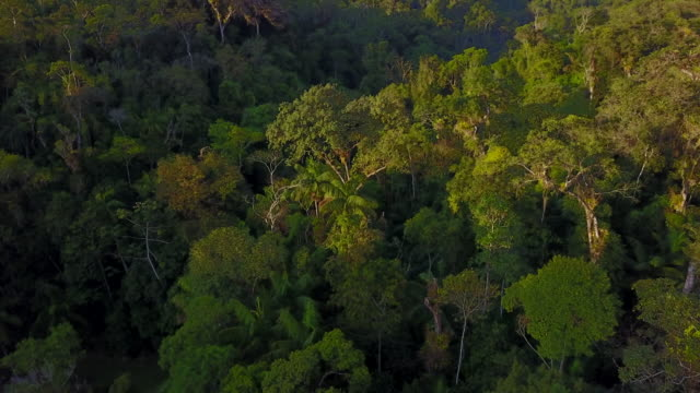 tropical rainforest - tree canopy stock videos and b-roll footage