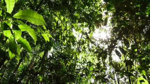 vídeos de stock, filmes e b-roll de floresta tropical - região amazônica