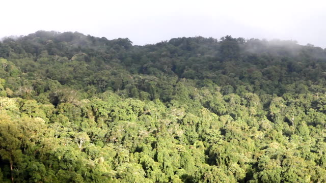 tropical rainforest - pinaceae stock videos & royalty-free footage