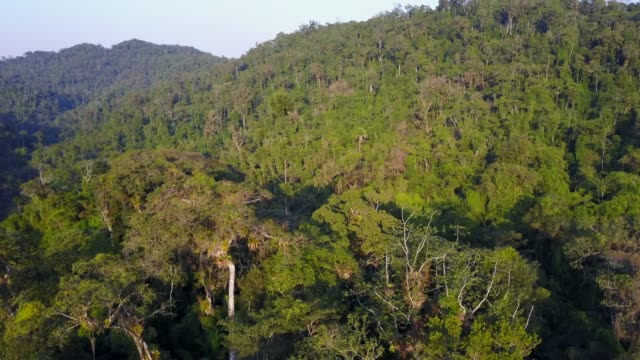 tropical rainforest - rainforest stock videos & royalty-free footage