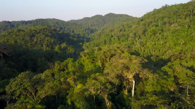 tropical rainforest - indonesia stock videos & royalty-free footage