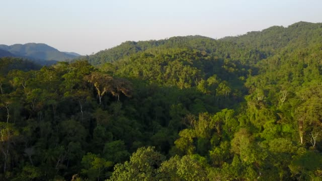 tropical rainforest - malaysia stock videos & royalty-free footage