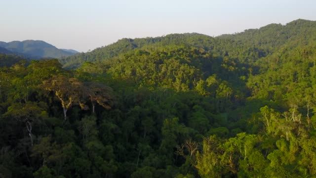 tropical rainforest - sabah state stock videos and b-roll footage