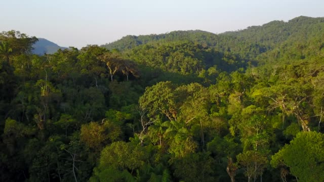 tropical rainforest - overhead view stock videos & royalty-free footage