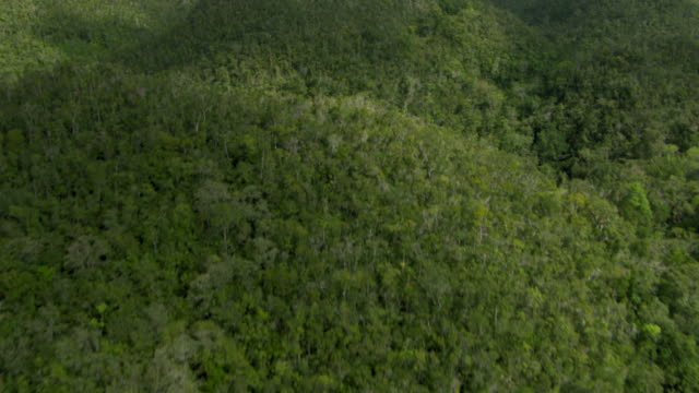 tropical rainforests flourish in the blue mountains of jamaica. - jamaica stock videos & royalty-free footage
