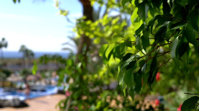 Tropical resort in 4k slow motion