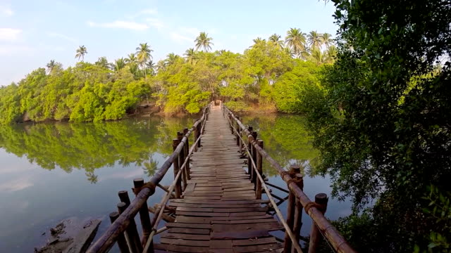 tropical river bridge - bamboo plant stock videos & royalty-free footage