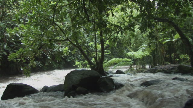 ms, tropical river rapids, tahiti, french polynesia - insel tahiti stock-videos und b-roll-filmmaterial
