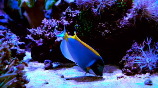 tropical saltwater fish under water eating off the sand floor - reef stock videos and b-roll footage