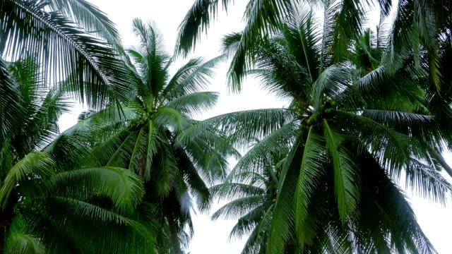 tropischen landschaft mit palmen - klammer stock-videos und b-roll-filmmaterial