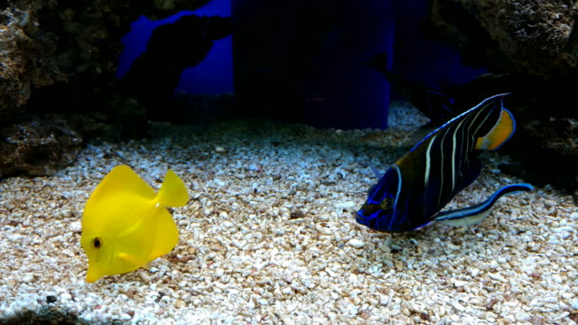 Tropical Sea Fishes