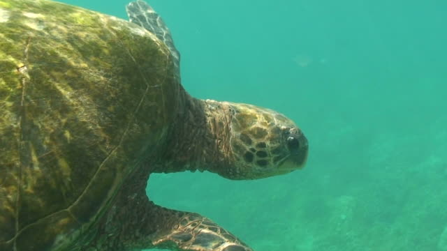 tropical sea turtle high definition saved highest quality - turtle stock videos & royalty-free footage