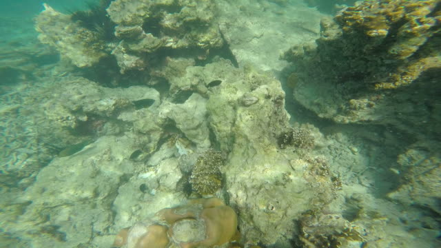 tropical shoal of fish - polynesian culture stock videos & royalty-free footage