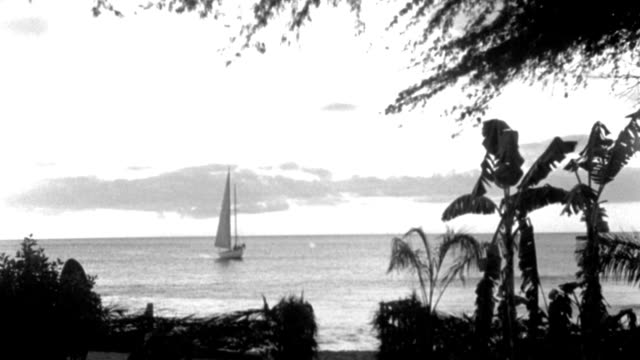 sunset - tropical shore - palms and hedge f.g. - yacht center - moves r a little - sailboats - b&w. - golden hour stock videos & royalty-free footage