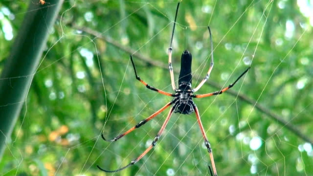 tropical spider in web - arachnid stock videos and b-roll footage