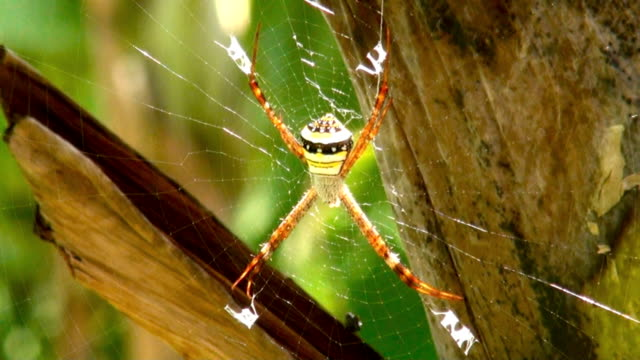 tropical spider - arachnid stock videos and b-roll footage