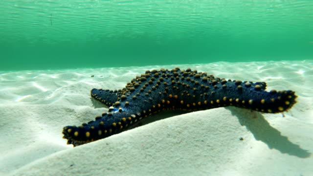 Tropical Starfish in Indian Ocean