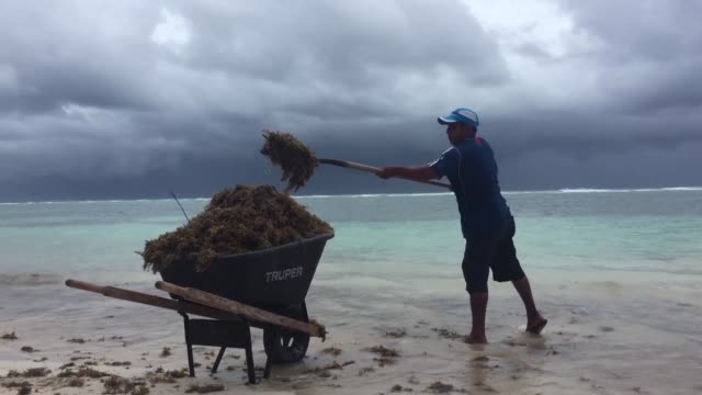 tropical storm franklin swept mexico's yucatan peninsula on tuesday dumping heavy rain on its pristine beaches but doing relatively little damage... - yucatan peninsula stock videos and b-roll footage