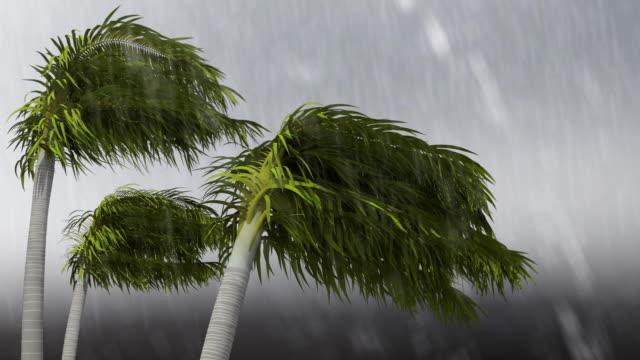 vídeos y material grabado en eventos de stock de tormenta tropical - huracán