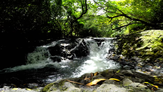 tropical stream - maui stock videos & royalty-free footage
