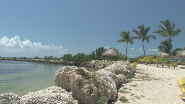 vidéos et rushes de tropicale plage ensoleillée - 30f haute définition - arbre tropical