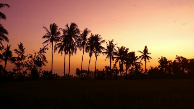 Tropical sunset behind coconut trees with passing birds