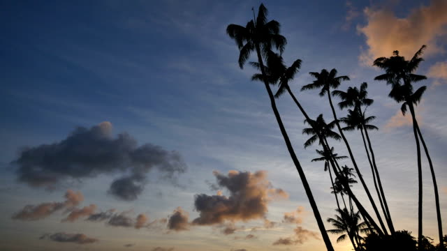 tropical sunset: hawaii - coconut palm tree stock videos & royalty-free footage