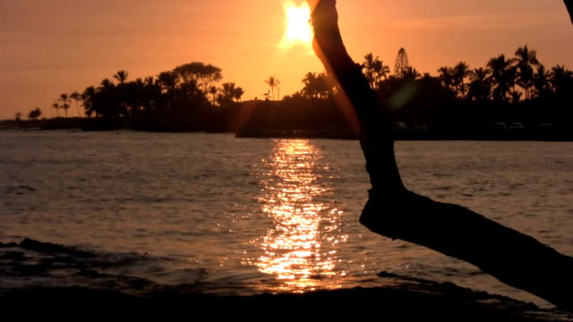 tropical sunset hawaiians oahu waikiki islands palm trees - south pacific ocean stock videos and b-roll footage