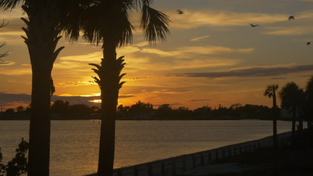 Tropical Sunset in Florida with birds flying in the sky
