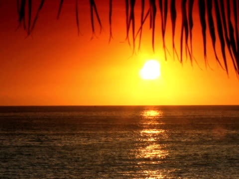 stockvideo's en b-roll-footage met pal: tropical sunset - bedektzadigen