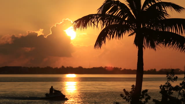 tropical sunset - palm tree stock videos & royalty-free footage