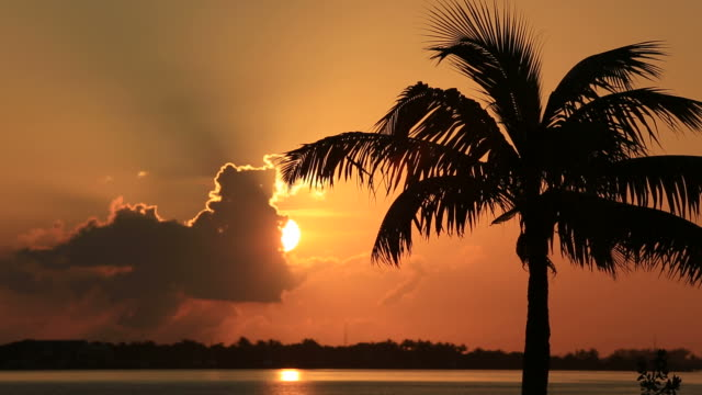 tropical sunset - palm stock videos & royalty-free footage