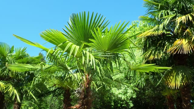tropical tree branches close-up - tropical tree stock videos & royalty-free footage
